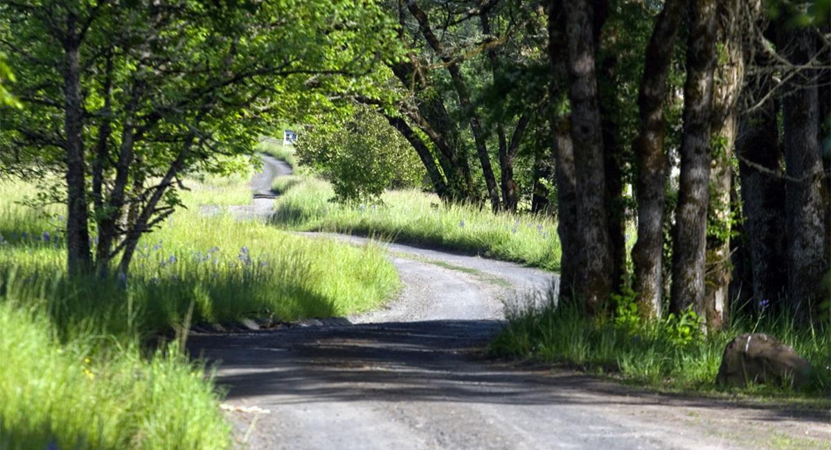 Dorris Ranch Pathway