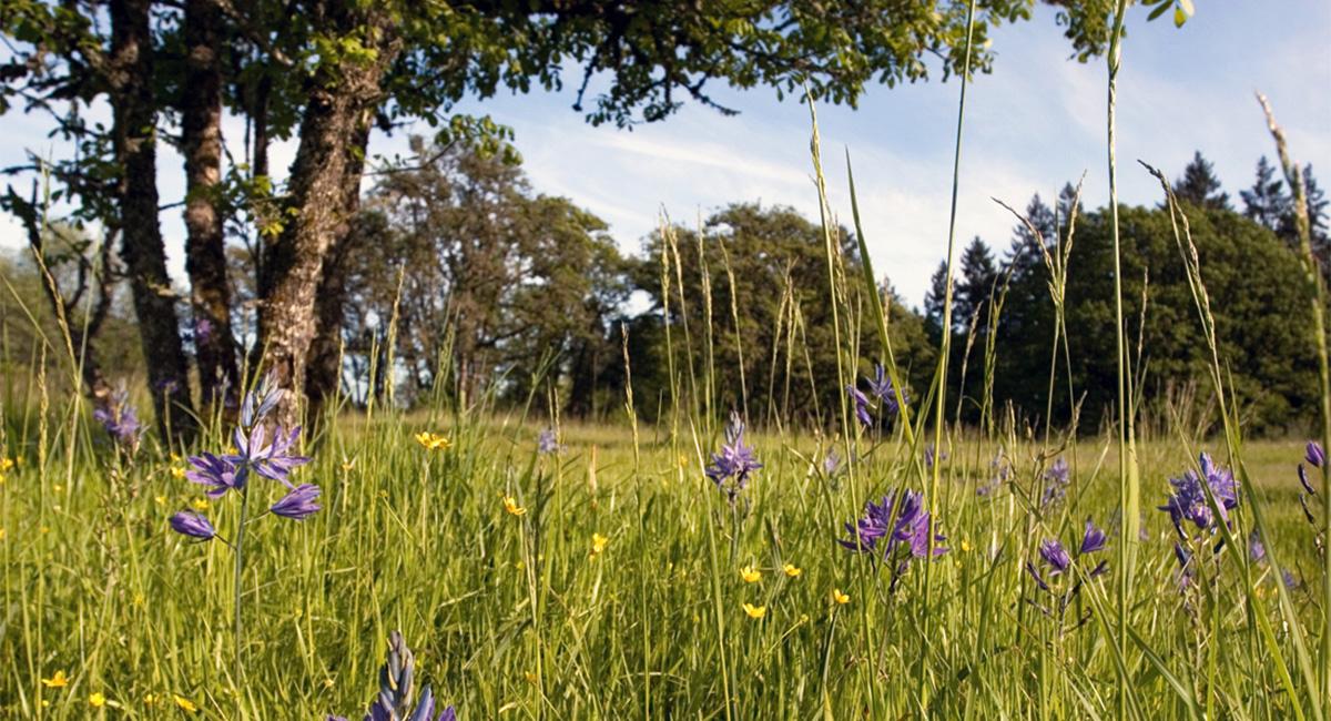 Dorris Ranch Meadow