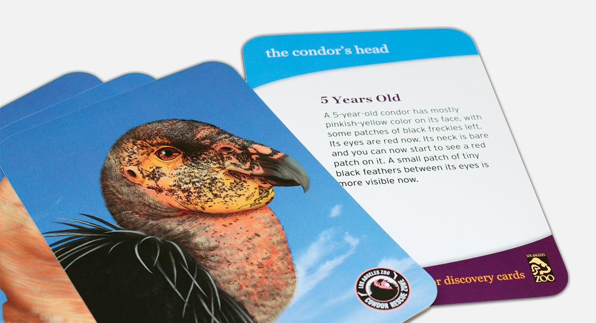 Condor Rescue Center Cards