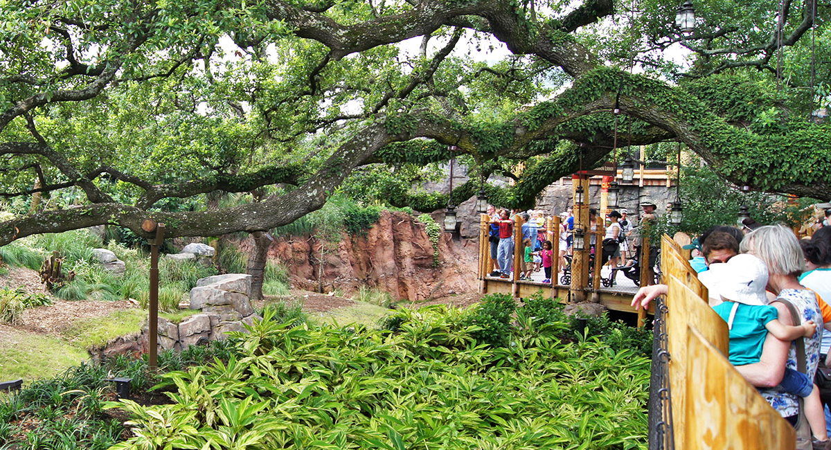 Houston Zoo Gorillas of the African Forest Exhibit Design