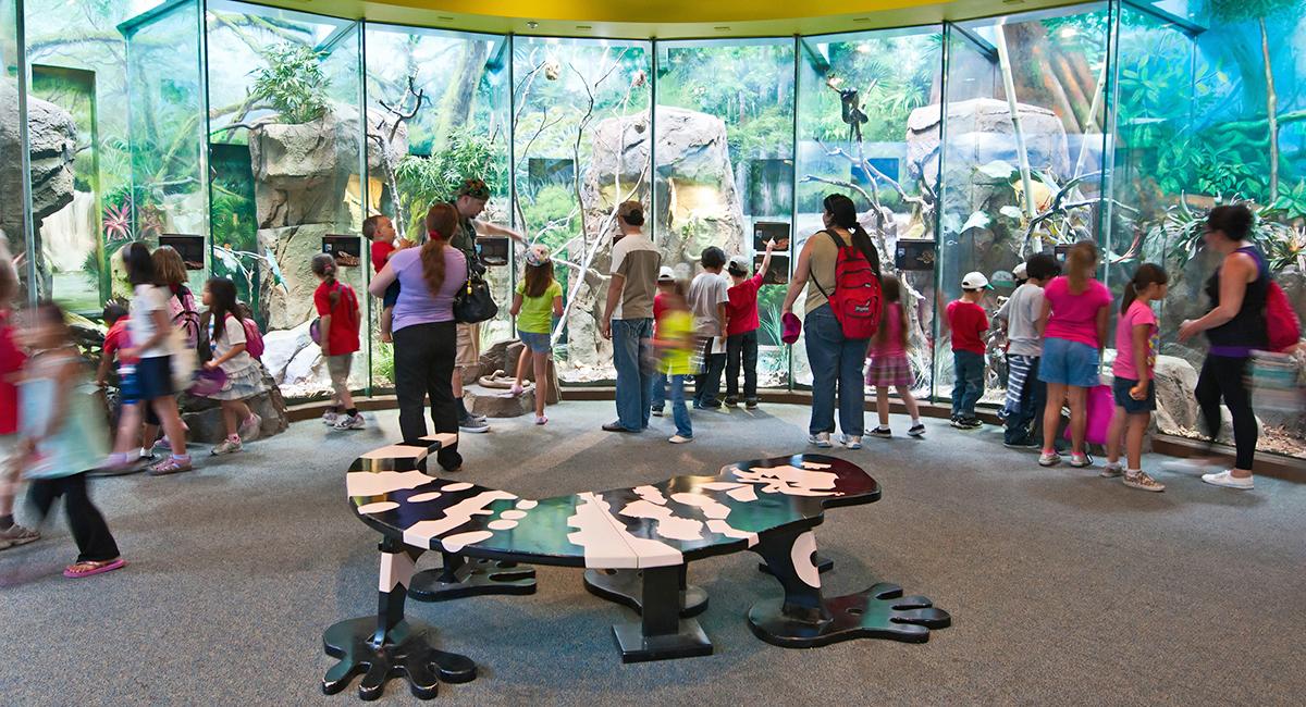 LA Zoo - Living Amphibians, Invertebrates and Reptiles