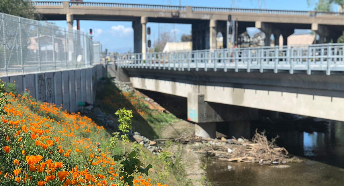 Caltrans Bridge Replacement Restoration