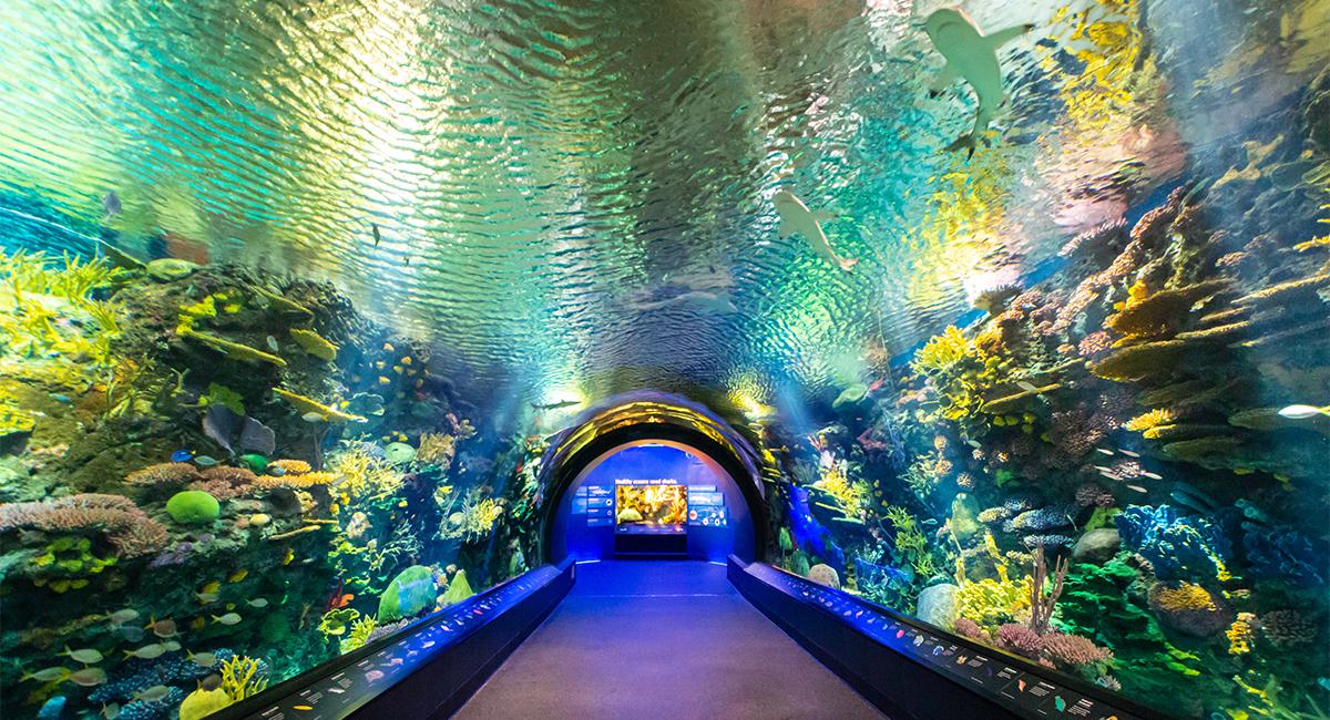 Ocean Wonders: Sharks! New York AquariumOcean Wonders: Sharks! New York Aquarium Design