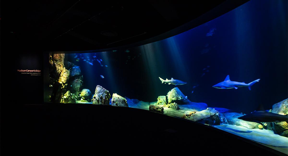 Ocean Wonders: Sharks! New York Aquarium Design