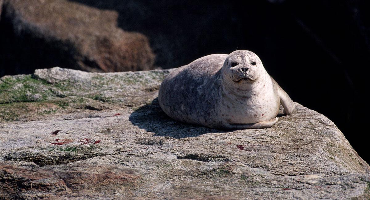 Alaska Sea Life sea lion