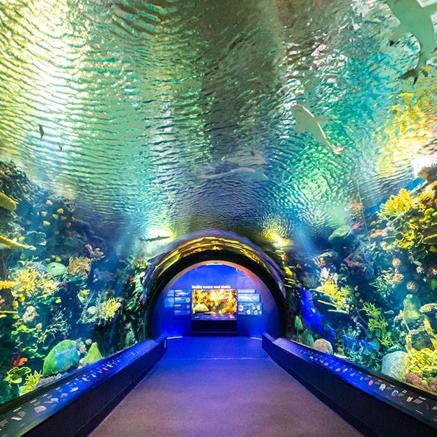 New York aquarium shark exhibit