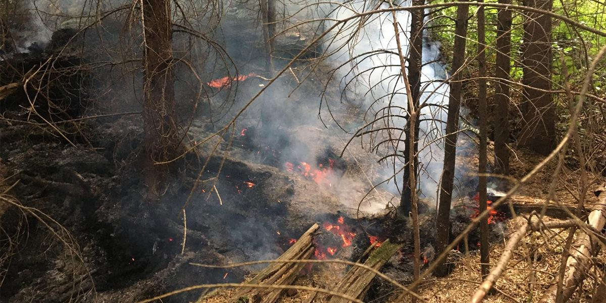 Wildfires Affect Park Conservation