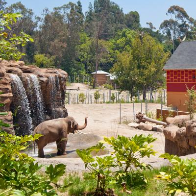LA Zoo Design Elephants of Asia