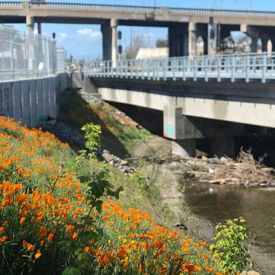 Caltrans Bridge Replacement Restoration