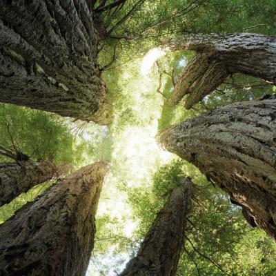 Mendocino Woodlands