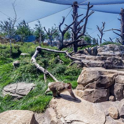 Regenstein Macaque Forest